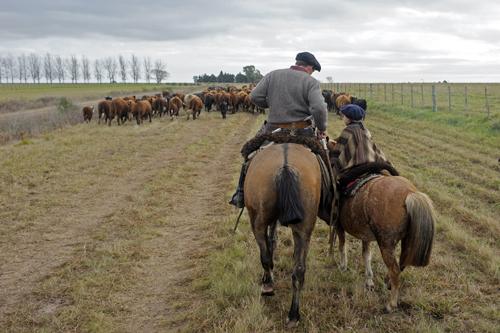 Tradition des gauchos à cheval