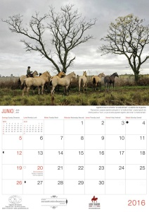 Troop of criollos horses, near San Antonio de Areco, Argentina. Photo: